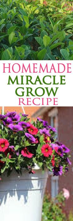 Save money and get better results with this fertilizer recipe!