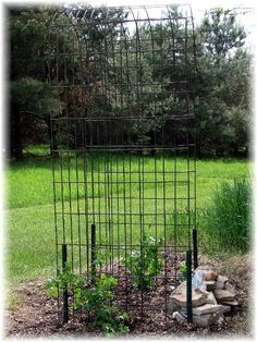 Jeanne Sammons made a simple and sturdy garden arbor from a humble hog panel. Hog panels are 16 feet long by 34 inches high wire fence panels. They're around $15-$25 each at farm suppl and hardware stores.