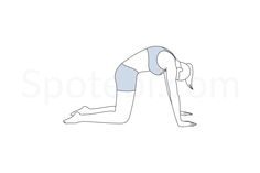 As you round your back, exhale and maintain your hands and knees in the same position. Release your head toward the floor and feel the stretch in your spine and neck. http://www.spotebi.com/exercise-guide/cat-pose/