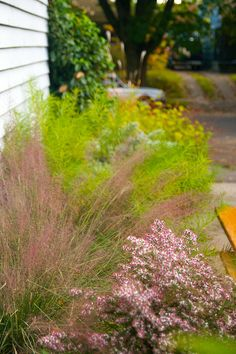 Muhlenbergia capillaris (Pink Muhly Grass) with Aster 'Prince', Amsonia hubrchitii and Persicaria 'Lance Corporal' in the background - Autumn 2011 Landscaping Plants, Outdoor Landscaping, Garden Plants, Outdoor Gardens, Landscaping Ideas, Landscape Elements, Landscape Design, Garden Design, Drought Tolerant Garden