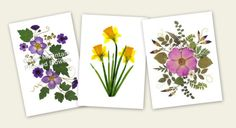 Hey, I found this really awesome Etsy listing at https://www.etsy.com/listing/113721766/pressed-flower-cards-set-of-6-notecards
