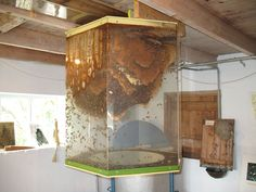 Indoor plexiglass hive