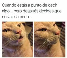 Collection of fun humor memes and dank pictures Funny Cute, The Funny, Funny Jokes, Funny Food, Daily Funny, Funny Stuff, Memes Humor, Cat Memes, Hilarious Stuff