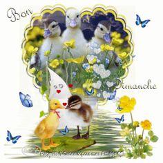 Bon Dimanche ♥
