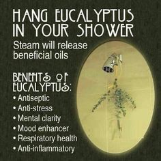 Eucalyptus for your shower