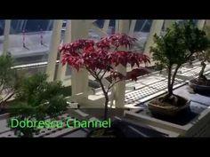 THE BEST BONSAI COLLECTION Bonsai, Youtube, Plants, Collection, Plant, Youtubers, Youtube Movies, Planets, String Garden