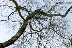 Trees/winter...Madison Waitman Photography
