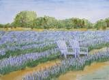 Blanco Texas Lavender Field with Chairs #3 by Nan Henke
