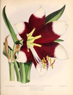 new ser. v.3 (1874) - The Floral magazine; - Biodiversity Heritage Library