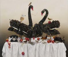 Black Swans of Trespass by Kate Bergin, 2011