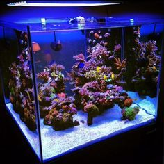Saltwater Aquarium Fish - Find incredible deals on Saltwater Aquarium Fish and Saltwater Aquarium Fish accessories. Let us show you how to save money on Saltwater Aquarium Fish NOW! Saltwater Aquarium Setup, Coral Reef Aquarium, Saltwater Fish Tanks, Aquarium Design, Marine Aquarium, Aquarium Fish Tank, Fish Aquariums, Aquarium Ideas, Marine Tank