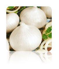 White Onion (White Sweet Spanish) seeds at $.99/pack | Grow Organic Onions NON-GMO