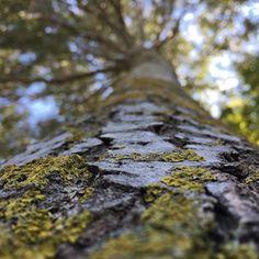 """8 kedvelés, 1 hozzászólás – Hanging Lens (@hanginglens) Instagram-hozzászólása: """"climbing #tree #focused #plant #nature #forest #green #mushroom #mushrooms #edge #top #climbing…"""""""