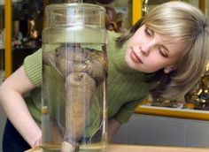 Rasputin's penis, displayed at the first Russian museum of erotica in St. Petersburg on June 9, 2004. Iceland's Phallological Museum will soon add a 95-year-old's pickled penis to its large collection.