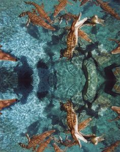 Crocosaurus Cove, Darwin, NT