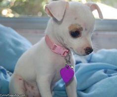 Find Healthy Puppy of Reputable Breeder