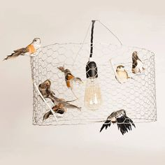 Hey, I found this really awesome Etsy listing at https://www.etsy.com/listing/159601878/in-a-birds-eye-view-lamp