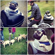 Pug - Highway to hell :D