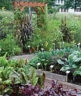 Companion Planting Guide. Even though this particular garden is going to consist of culinary and medicinal herbs I will still plant some veggies here and there among the herbs and flowers that would be their companions. www.burpee.com