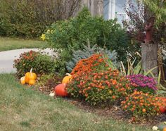 Front yard fall flowers