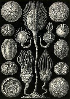 Mirella Bruno Visual Acoustics & Pattern Pollinating Visionist — magictransistor: Ernst Haeckel, Kunstformen der...
