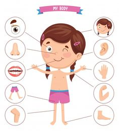 Vector illustration of human body Premiu... | Premium Vector #Freepik #vector #people #heart #kids #hand Body Parts Preschool Activities, Body Preschool, Preschool Learning Activities, Preschool Math, Preschool Worksheets, Toddler Activities, Teaching Kids, Kids Learning, Listening Activities