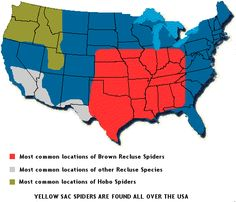 Brown Recluse (and their desert subspecies) and Hobo Spider Range map. My quick research into Recluses suggests that Missouri seems to be the epicenter for bites requiring hospitalization, which is more anecdotal than certifiable.
