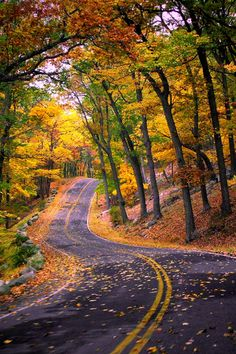 Long and winding autumn road...