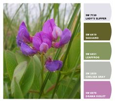 Ooooh, purple. Paint colors from Chip It! by Sherwin-Williams