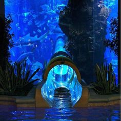 Go for a ride in the underwater water slide to se sharks and fish. Atlantis Water Park Dubai.