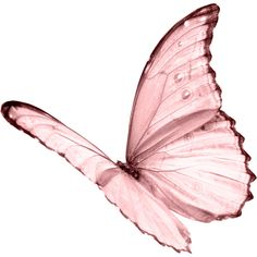 Pink Butterfly...polyvore