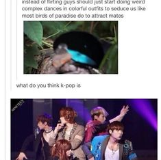 I SWEAR!!! Kpop should beat out the Supernatural fandom by taking over every post on Tumblr. I mean, there are SOOOOO many connections!!!