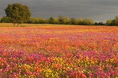 7) The dramatic contrast between the vibrant wildflowers and foreboding sky is absolutely breathtaking.