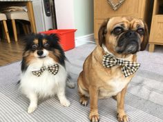 Sorry but Lucy and I don't like bow ties!