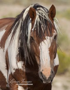 Love this horse's color! And that mane! Horse Buddy's on Pinterest