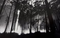 Unlike the horrific fires of 2009, this bushfire slowly burnt its way through the bush as the the dawn broke. Kinglake, 1983.
