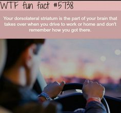 WTF Fun Facts is updated daily with interesting & funny random facts. We post about health, celebs/people, places, animals, history information and much more. New facts all day - every day! Wow Facts, Wtf Fun Facts, True Facts, Funny Facts, Funny Memes, Random Facts, Crazy Facts, Random Stuff, Useful Facts