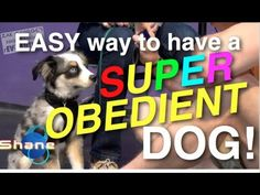 Easy way to Have a Super Obedient Dog - Zak George