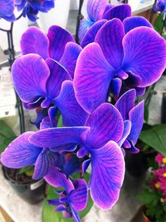 Here's an EASY way to Water your Orchid Plants:  Once a week... place a few ice chips on the top of the soil or cocoa fiber that your orchids are planted in.  The ice chips melt slowly and are absorbed by the root system of the plant. #ubloom @J Schwanke