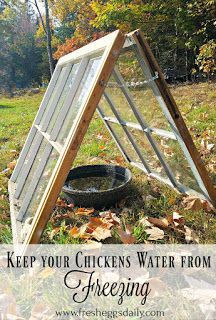 Keep your Chickens' Water from Freezing This Winter with a Solar Sunroom Easy Chicken Coop, Portable Chicken Coop, Backyard Chicken Coops, Backyard Farming, Chickens Backyard, Chicken Waterer, Chicken Scratch, Keeping Chickens, Raising Chickens