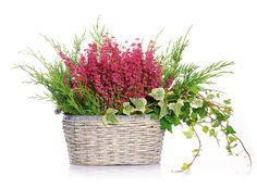 Flora, Gardening, Vintage, Halloween, Home Decor, Hampers, Plants, Decoration Home, Room Decor