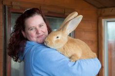 Adorable Dog-Sized Rescue Rabbit Finds Forever Home