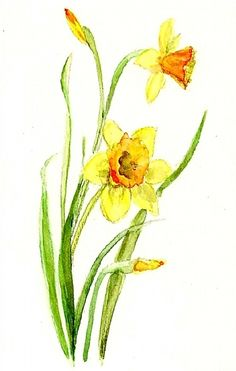 17 Best images about Watercolor Flowers Daffodils on . Watercolor Cards, Watercolour Painting, Watercolor Flowers, Painting & Drawing, Watercolors, Daffodil Flower, Flower Art, Paint And Sip, Image Painting