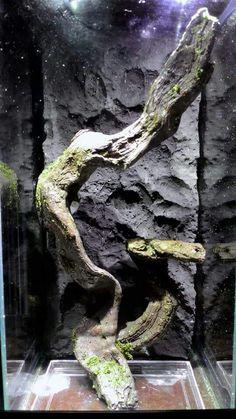 Darkness enclosure for tarantula