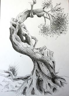 Croatia .... island of Pag, over 400 years old olive tree 3 - pen and ink - Dora Bratelj - Pictify - your social art network