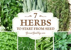 Growing Herbs: 7 Herbs to Start from Seed   Grow a Good Life