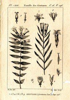 "buffon botanical french 1775 engraving 4 x 6""  $25 - 10"