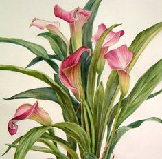 Pink Calla Lilies - Fine Art Print from a Watercolor original. $30.00, via Etsy.