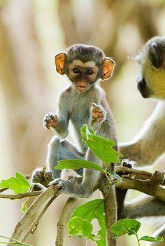 Animals are amazing — Baby