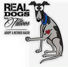 Adopt a greyhound and find the love of your life!!